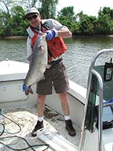 Mike Mangold with blue catfish at Dyke Marsh, Virginia.
