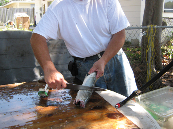 Cleaning fish for Fish cleaning tools