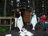 Halibut caught off Raspberry Island, Alaska. <em>Author: NancyHeise at en.wikipedia</em>