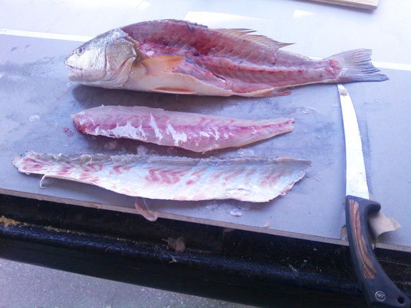 Recipes For Red Drum Fish