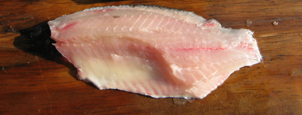Filleting fish for Sheepshead fish recipe