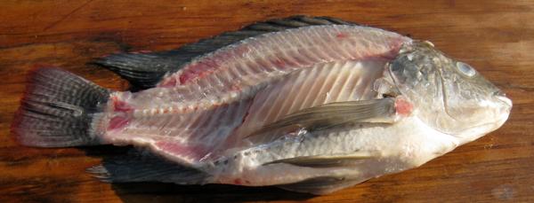 Filleting FishSaltwater Sheepshead Good To Eat