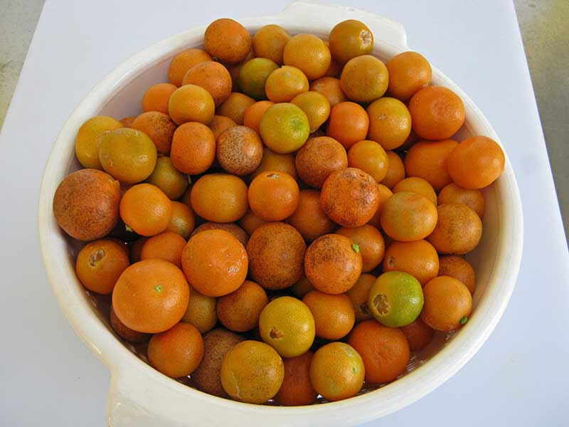 Seckel Pear  Pear Trees  Stark Bros