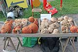 Wild Mushrooms At Polish Farmers Market